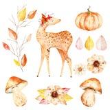 不可思议的水彩秋天设置与鹿 皇族释放例证