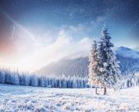 不可思议的片刻,积雪的树 33c 1月横向俄国温度ural冬天 免版税库存照片