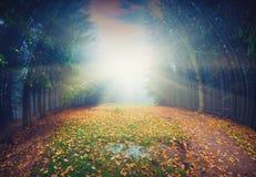 不可思议的秋天forest_vintage 免版税库存图片