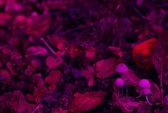 不可思议的童话蘑菇家庭 免版税图库摄影