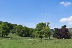 不可思议的草甸,在Stannage边缘附近,在Haversage 库存照片