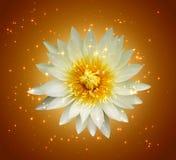 不可思议的莲花摘要  免版税图库摄影