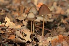 不可思议的蘑菇在森林里 库存图片