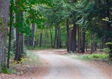 不可思议的道路绕通过一个厚实的绿色森林 免版税库存照片