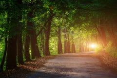 不可思议的隧道和路通过一个厚实的森林有阳光的 T 库存图片