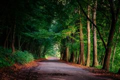 不可思议的隧道和路通过一个厚实的森林有阳光的 T 库存照片