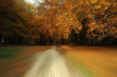 不可思议的颜色在秋天森林里 库存图片