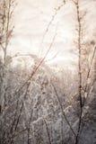 不可思议的结冰的草甸 免版税图库摄影