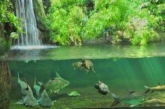不可思议的水族馆 免版税库存照片