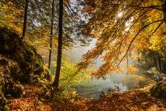 不可思议的atumn颜色在温暖的好日子 免版税库存图片