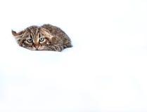 不可靠的小猫 库存照片