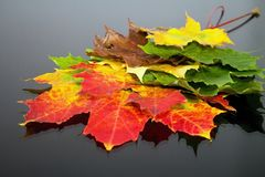 不同地色的槭树叶子抽象背景  不可思议的秋天颜色 免版税库存图片
