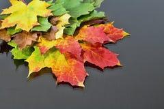 不同地色的槭树叶子抽象背景  不可思议的秋天颜色 免版税库存照片
