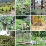 不同的动物拼贴画  库存图片