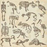 不同的动物- freehands的骨头和头骨 免版税图库摄影