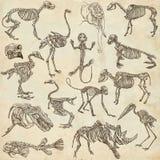 不同的动物- freehands的骨头和头骨 库存图片