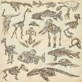 不同的动物- freehands的骨头和头骨 免版税库存图片