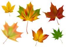 不同的叶子槭树向量 免版税库存照片