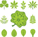 不同的叶子类型 库存照片