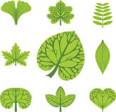 不同的叶子类型 免版税库存图片