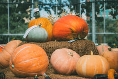 不同的品种和颜色南瓜  库存照片