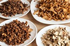 不同的品种干蘑菇  免版税库存照片