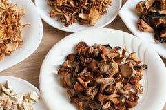不同的品种干蘑菇  免版税图库摄影