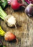 不同的品种新鲜的有机甜菜根  免版税库存图片