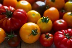 不同的品种蕃茄在木背景的 库存图片