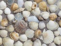 不同的壳背景  免版税库存照片