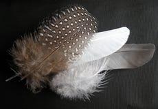 不同的形状和颜色鸟羽毛 免版税库存图片