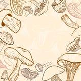 不同的手拉的蘑菇框架在柔和的淡色彩的 库存图片