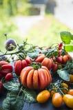 不同的新鲜的未加工的有机蕃茄从自然背景的庭院收获 免版税库存图片