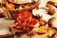 不同的新鲜的秋天蘑菇的选择 免版税图库摄影