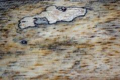 不同的木纹理和背景IV 免版税库存照片