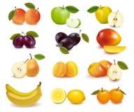 不同的果子组排序 库存照片