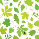 不同的树叶子和昆虫的无缝的样式 图库摄影