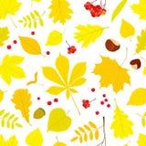 不同的树叶子的秋天无缝的样式 皇族释放例证