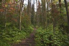 不同的树和植物看法在一个密集的绿色森林里 库存照片
