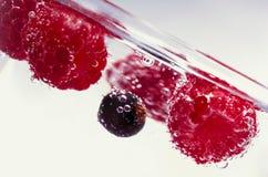 不同的浆果 免版税图库摄影