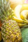 不同的热带和夏天果子品种  菠萝芒果椰子柑橘桔子柠檬苹果在棕榈叶的猕猴桃香蕉 免版税库存照片