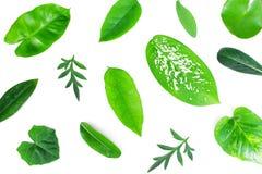 不同的热带绿色叶子 免版税库存照片
