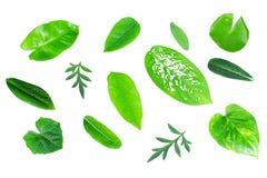 不同的热带绿色叶子 免版税库存图片