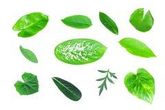 不同的热带绿色叶子 免版税图库摄影