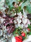 不同的热带花 免版税库存图片