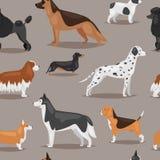 不同的狗助长逗人喜爱的崽小狗幼兽字符无缝的样式背景 皇族释放例证