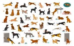 不同的狗品种和被混合的集合,宠物演奏赛跑跳的吃睡觉,坐放下并且走,窃取食物,咆哮,保护 我 皇族释放例证