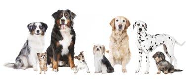 不同的狗 免版税库存照片
