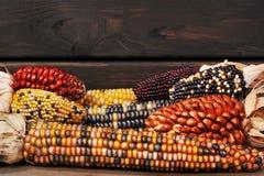 不同的玉米棒子 免版税图库摄影