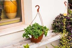 不同的盆的室外植物和的幼木 免版税图库摄影